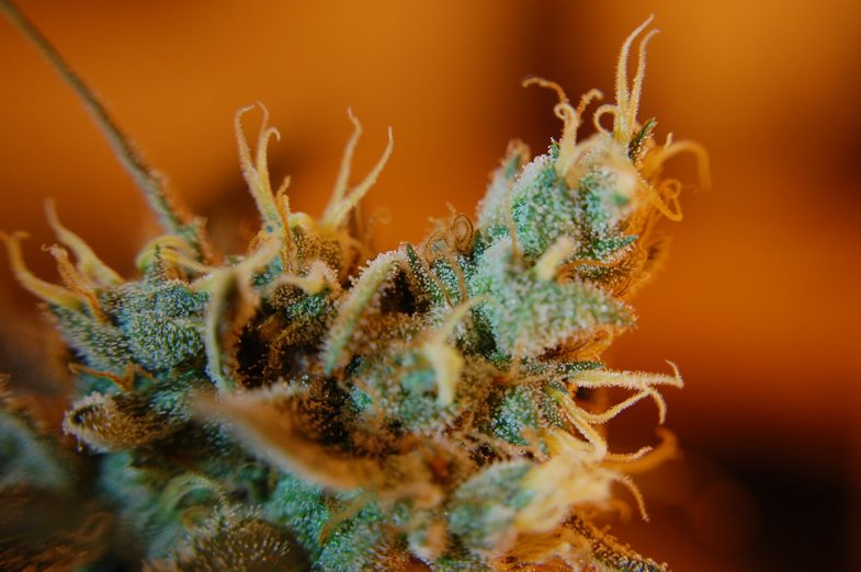 What are trichomes and what function they have