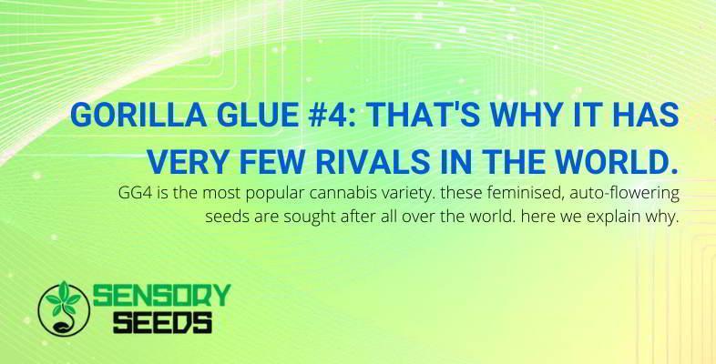 Gorilla Glue 4 characteristics.
