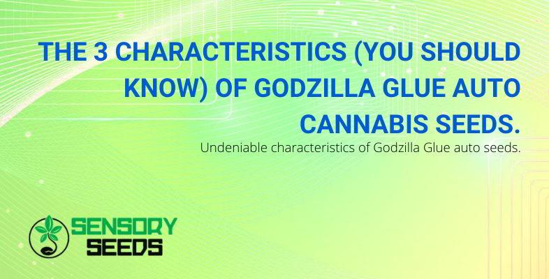 Characteristics of cannabis Godzilla Glue.