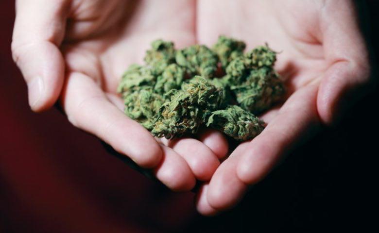 Amnesia haze marijuana flowers.