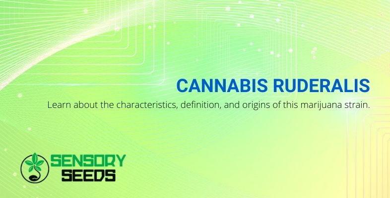 Cannabis ruderalis and characteristics.