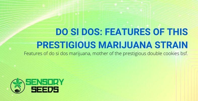 The characteristics of the Do Si Dos marijuana strain