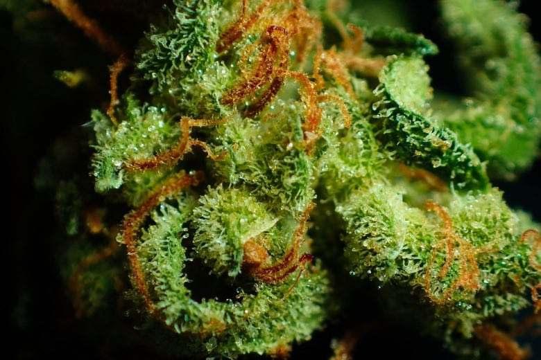 What is Marijuana Resin?