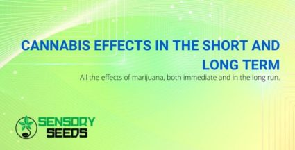 The effects of cannabis in the short and long term