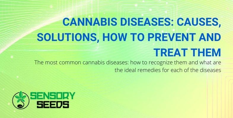 Causes and remedies for cannabis diseases