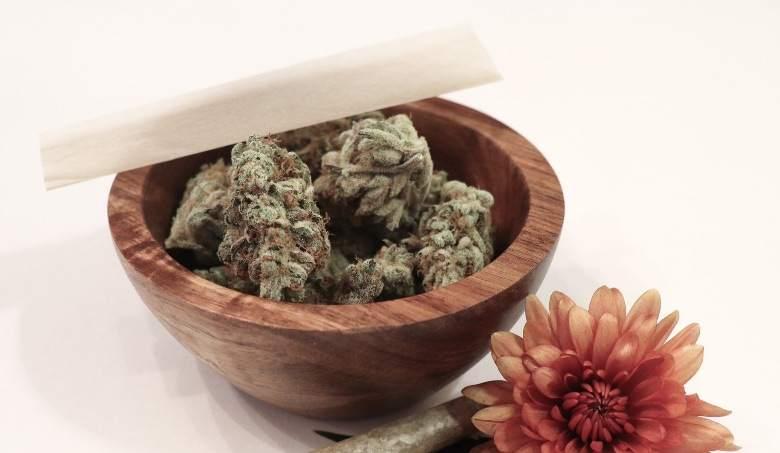 Cannabis sinsemilla: powerful and aromatic
