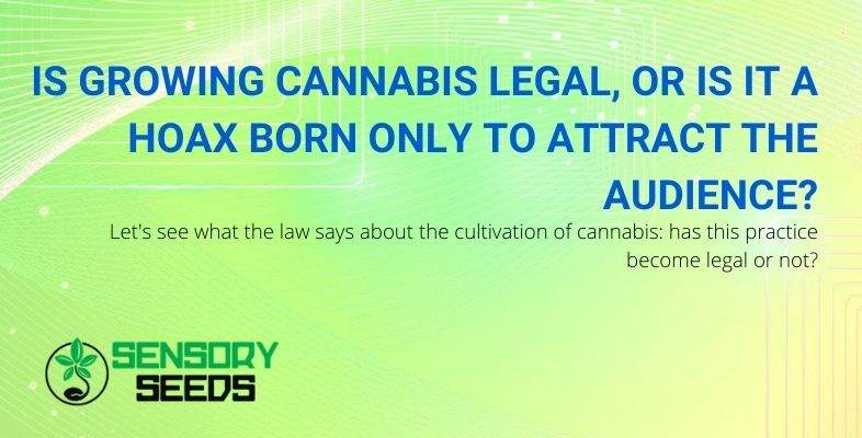 Is growing cannabis legal or not?