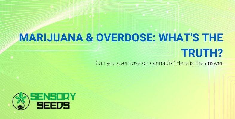 The whole truth about marijuana overdose