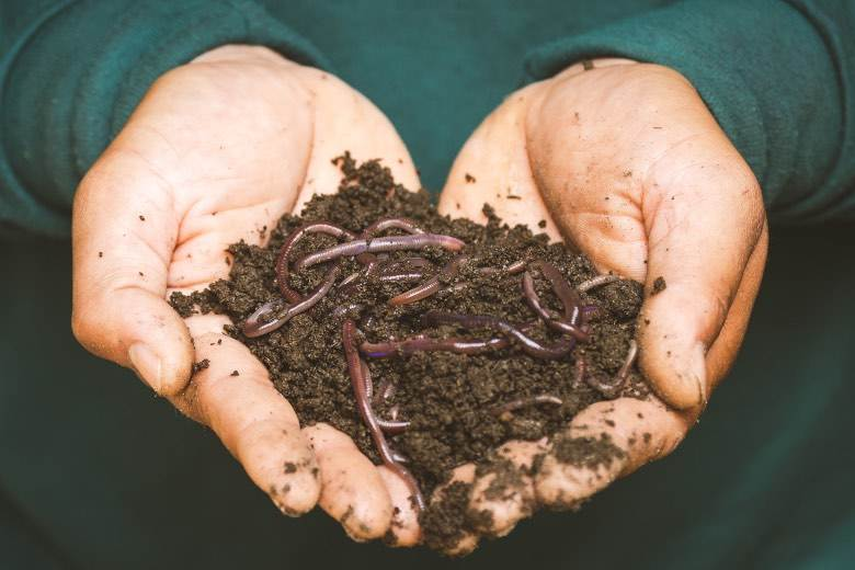Vermicompost: earthworm humus