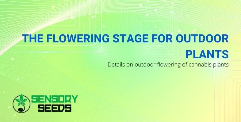 The outdoor flowering phase: all the details