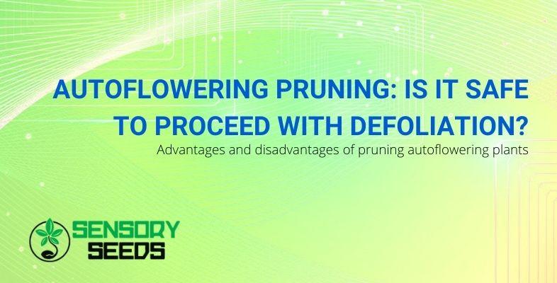 Is it safe to prune autoflowering plants?