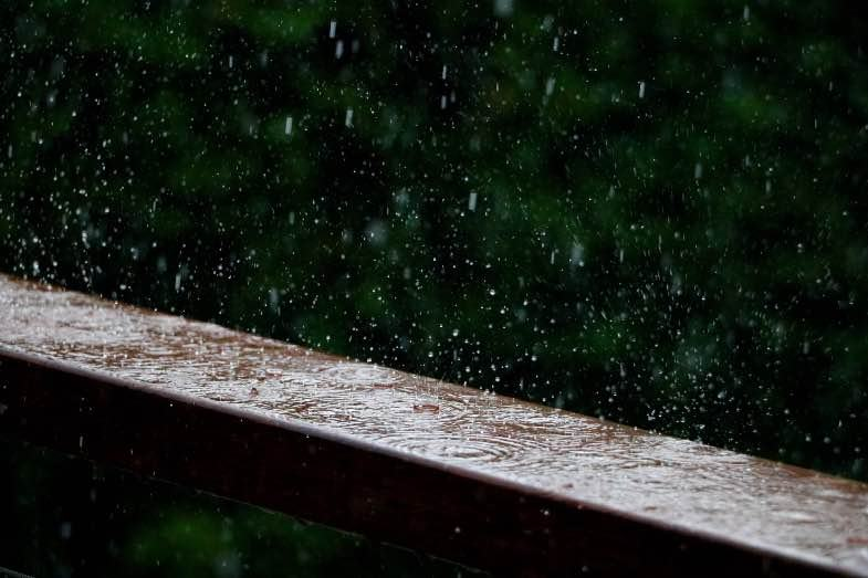 Rain can be a danger for outdoor flowering