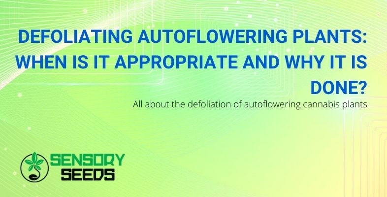 When to do the defoliation of autoflowering cannabis and why is it done?