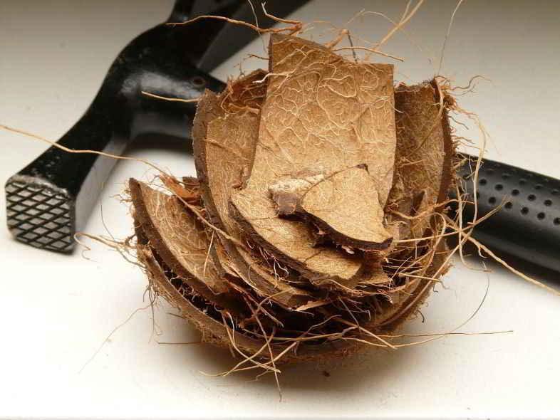What is coconut fiber?