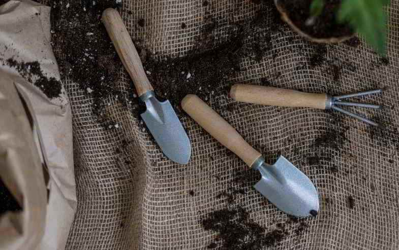 Excess fertilizer in hemp