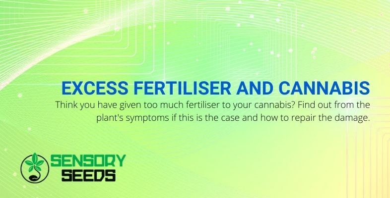 How to tell if you've given your cannabis too much fertilizer and how to fix it.