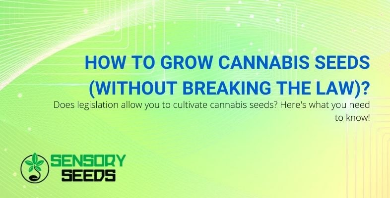 What does the law on growing cannabis plants say?