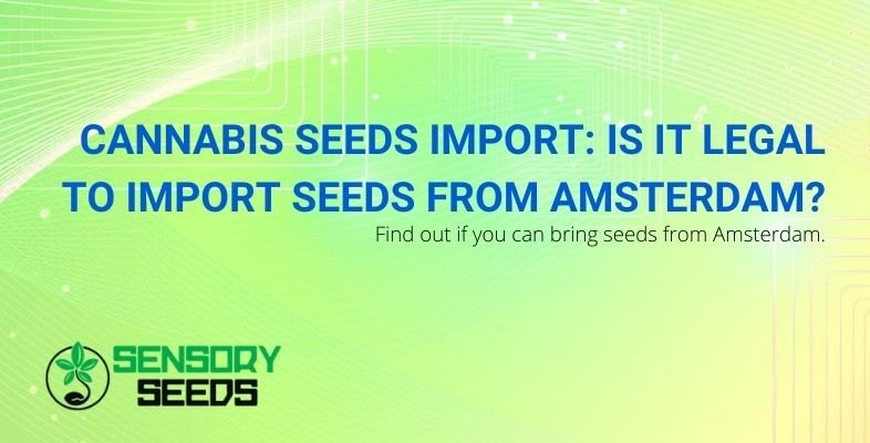 Can cannabis seeds be imported from Amsterdam?