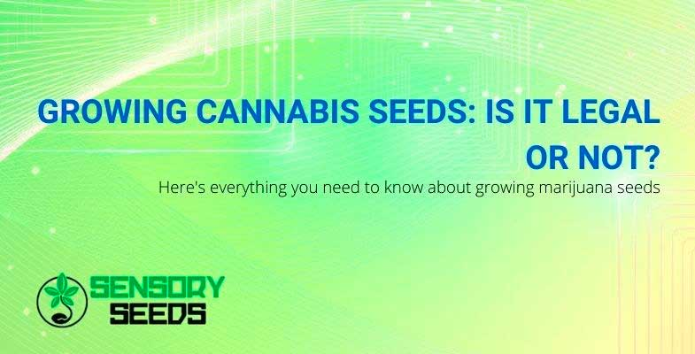All about growing marijuana
