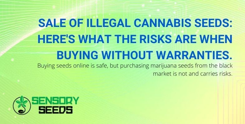 Buying illicit cannabis seeds online carries a lot of risks.