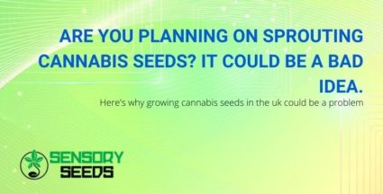 The idea of sprouting cannabis seeds, could be a problem in the UK!