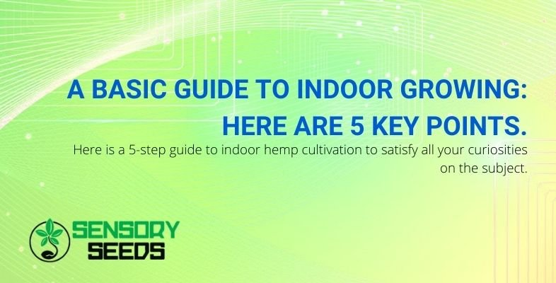 5-step manual for indoor cannabis cultivation