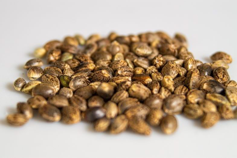 Where to store cannabis seeds?