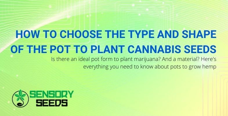 Let's see which pot is good for planting cannabis seeds