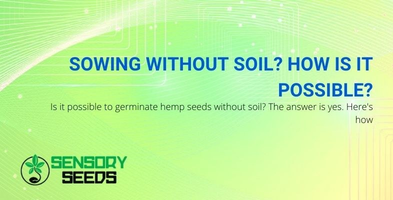 Here's how hemp seeds can be germinated without soil!