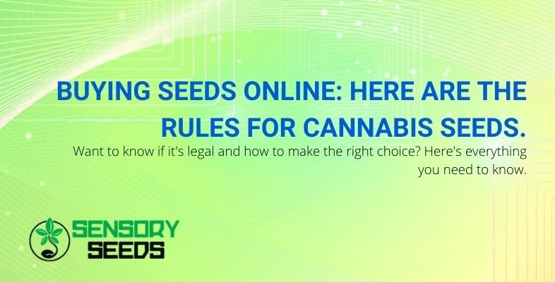 If you want to buy cannabis seeds online, there are rules.