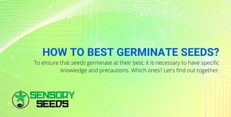 Better ways to germinate cannabis seeds