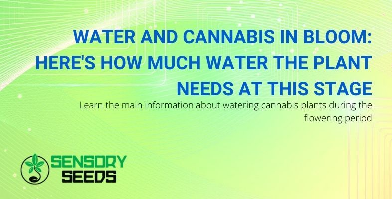How much water does cannabis need in the flowering phase?