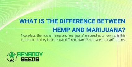 What are the differences between hemp and marijuana?