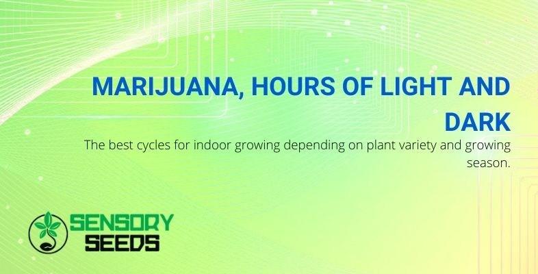 How many hours of light and dark should marijuana plants take?