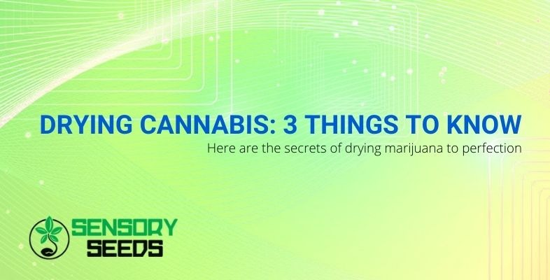 3 secrets to perfect cannabis drying