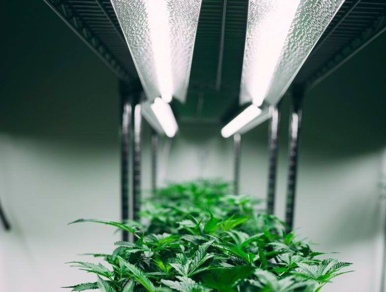 Indoor marijuana cultivation
