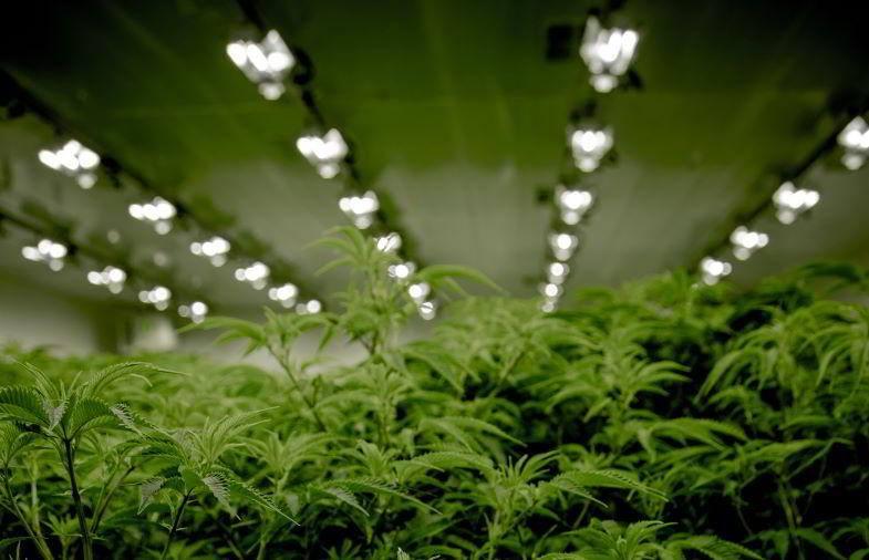 Indoor marijuana lighting
