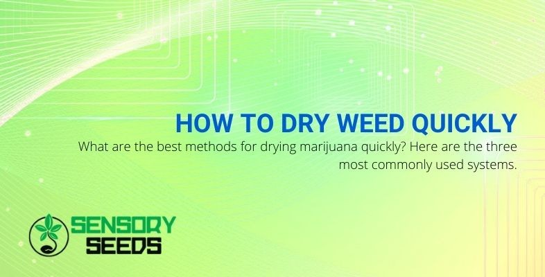 3 quick ways to dry your weed