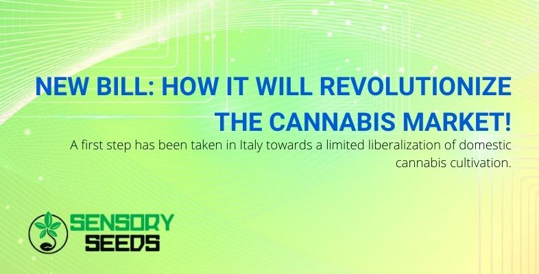 How will the cannabis market change with the new bill?