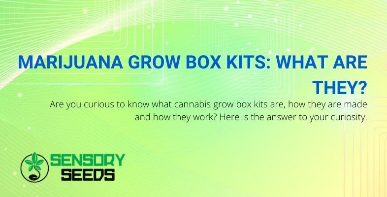 What are marijuana grow box kits and how do they work?
